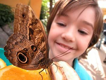 Album des ann es 2000 for Papillon jardin botanique 2015