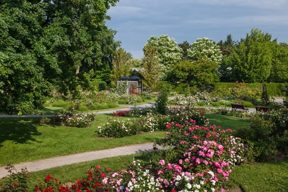This Last Section Includes The Roses From The Explorer Series Created By  Felicitas Svejda, Along With The Parkland Series, Also Developed By  Agriculture ...