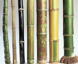 le jardin de chine le bambou au quotidien des chaumes. Black Bedroom Furniture Sets. Home Design Ideas