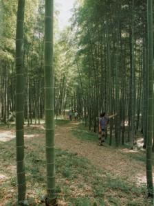 Le bambou au quotidien une gramin e g ante le jardin de for Graminee geante