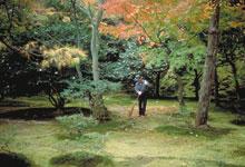Le jardin et le pavillon japonais le programme d 39 activit s fen tres ouvertes sur les jardins - Couvre sol jardin japonais ...